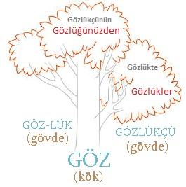 Kök Nedir Isim Kökleri Ve Fiil Kökleri örneklerle Türk Dili